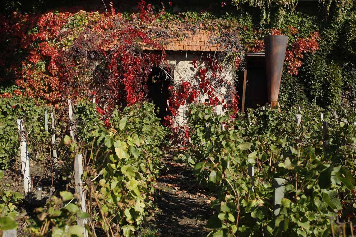 L'oenoparc le Hameau du Vin à Romanèche-Thorins