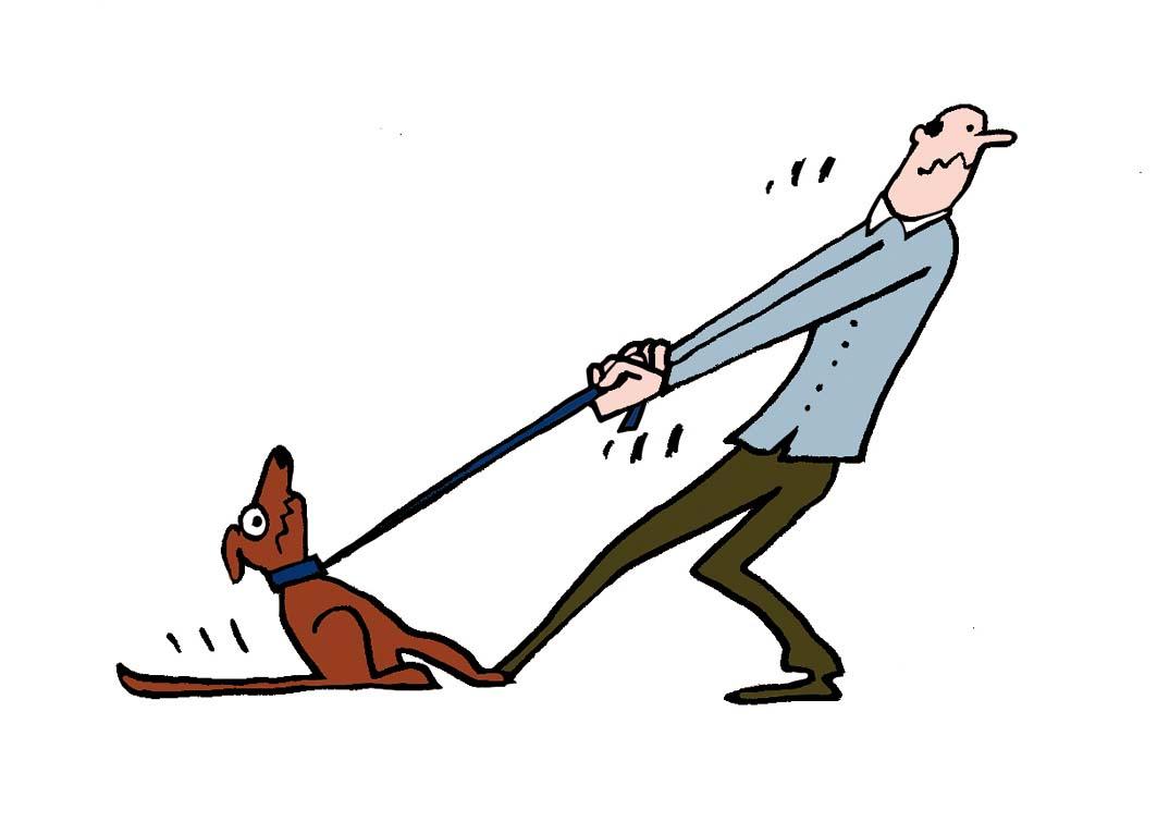 Mon chien peut-il m'accompagner au camping ?