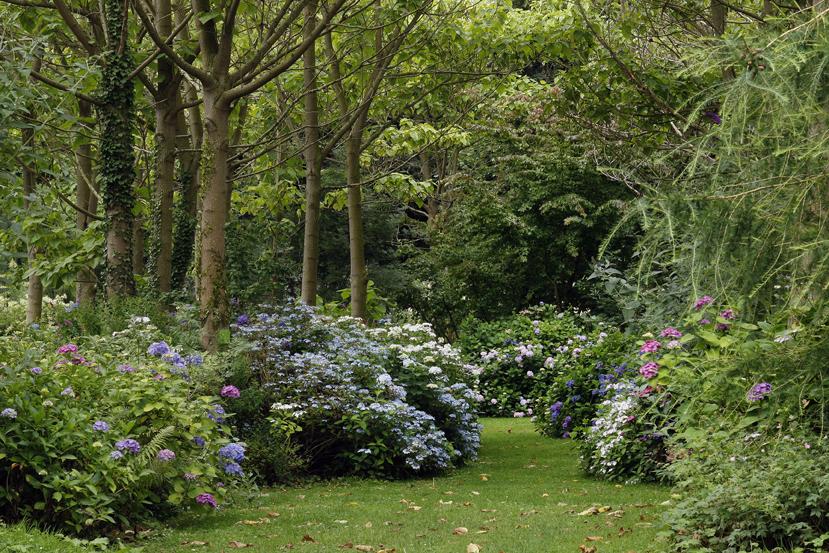 La collection d'hydrangéas des jardins de Shamrock