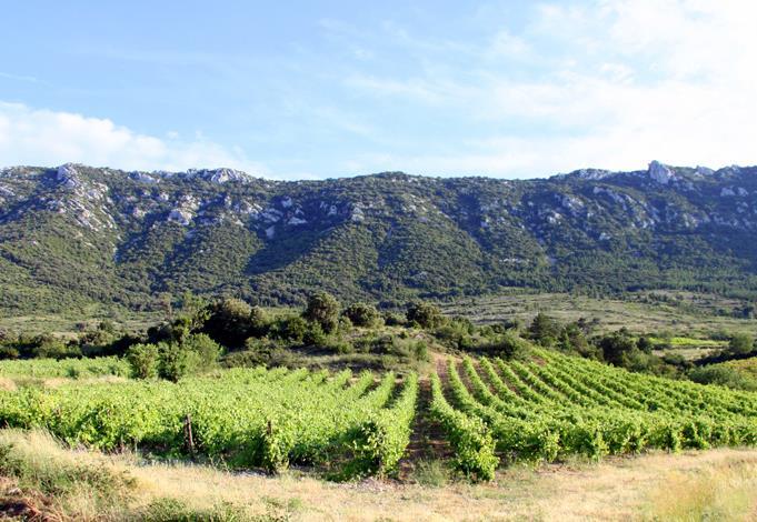 Paysages de garrigue et de vignoble dans l'Aude
