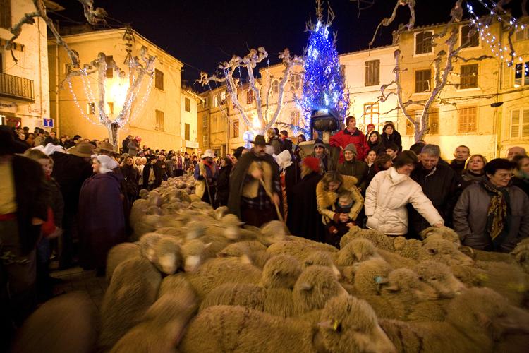 Les bergers et leurs moutons traversent les rues d'Allauch dans les Bouches-du-Rhône pendant le pastrage