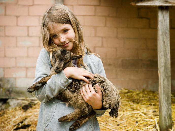 Le nourrissage des animaux à la ferme