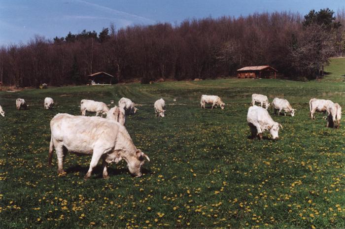 Agriculteurs et éleveurs aménagent des campings dans leurs fermes