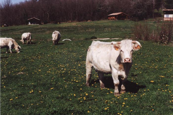 À la Ferme de La Besse à Camon en Ariège