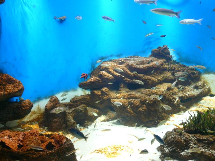 À l'aquarium Mare Nostrum de Montpellier