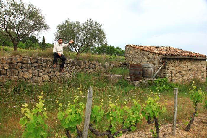 Rencontre avec un producteur viticole et oléicole à Payzac