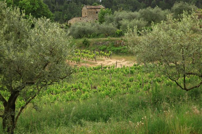 Payzac, pays de la vigne et de l'olivier