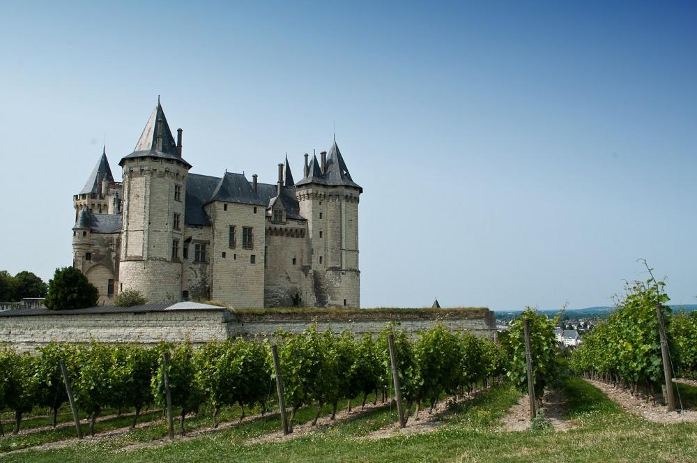Le Château de Saumur et ses vignes