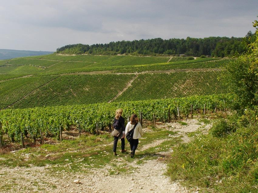 Le vignoble de Chablis en Bourgogne