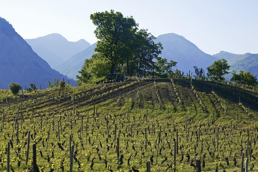 Les vins du Pays Diois