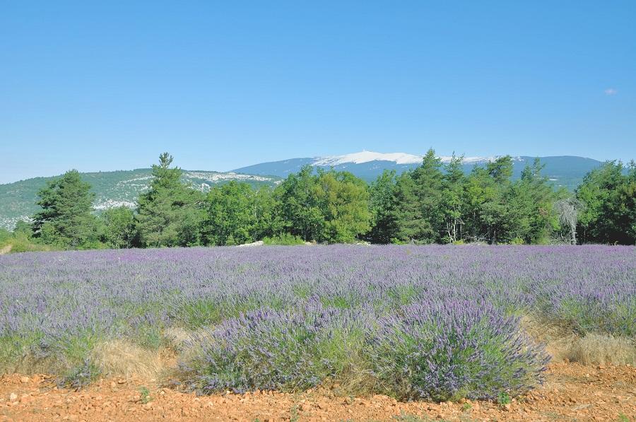 Le Mont Ventoux se voit de loin