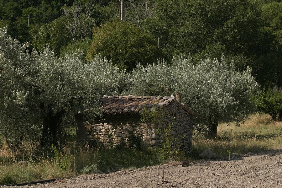 Paysage typique de la Drôme Provençale