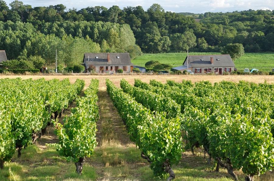 Vignoble du pays d'Anjou