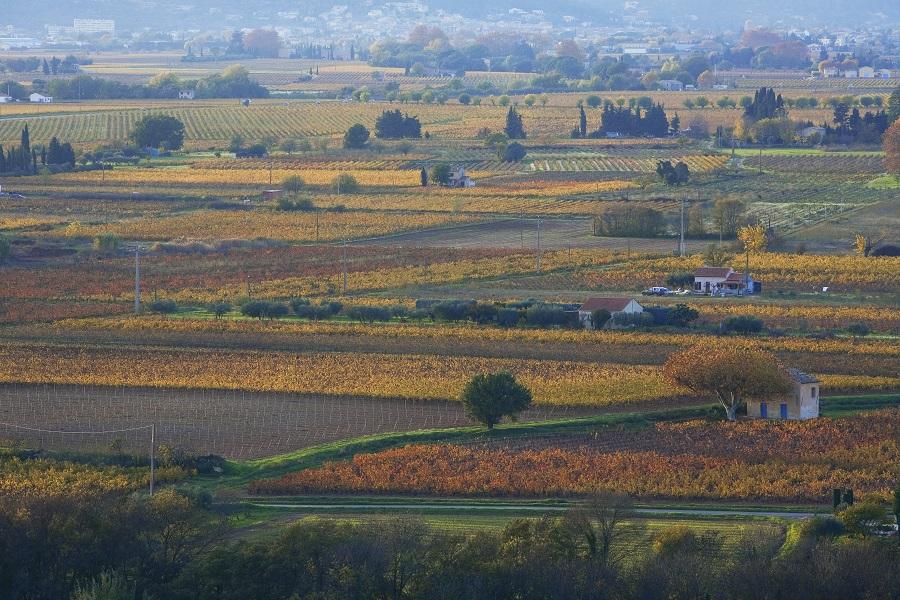 Le vignoble des Côtes de Provence