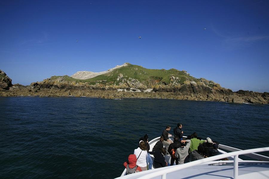 Visite des Sept-Îles en bateau