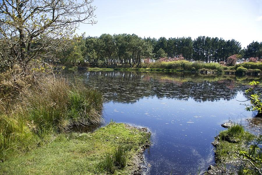 Marais de Mousterlin à Fouesnant