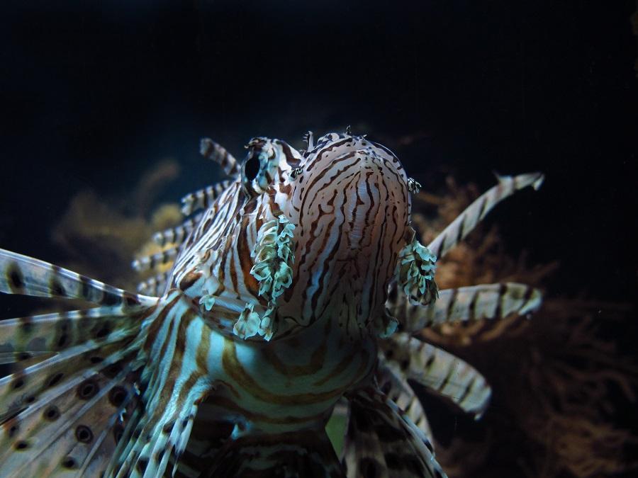L'aquarium de Boulogne-sur-Mer