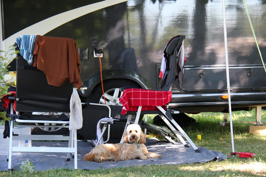 Emmener son animal en camping