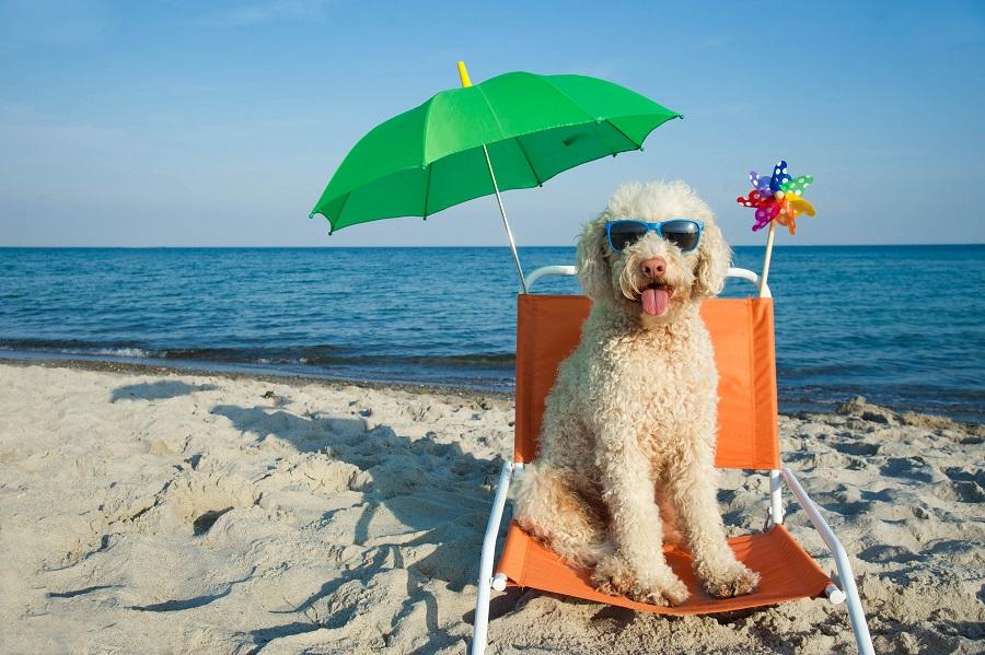Les animaux aiment aussi partir en vacances