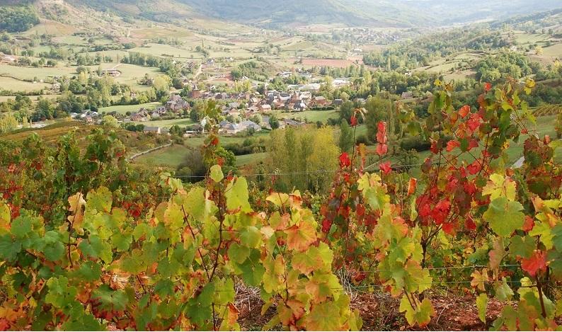 Vignoble à Clairvaux