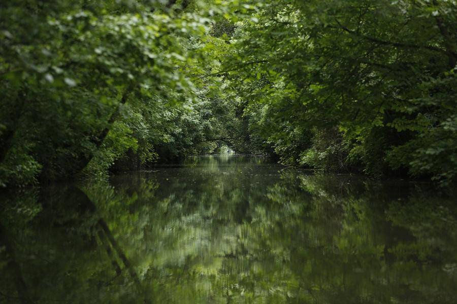 Le Marais Poitevin à Arcais