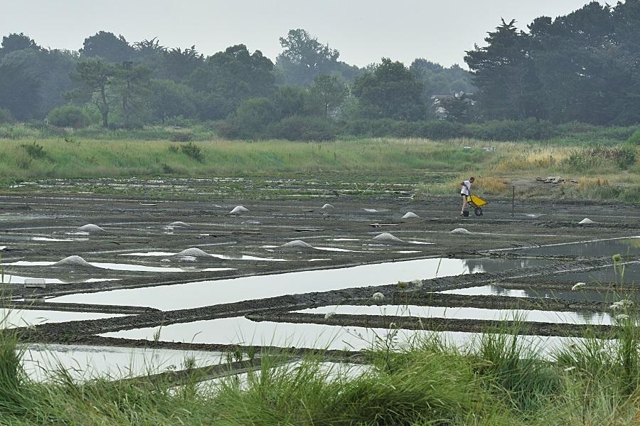 Marais salants pointe de Tascon