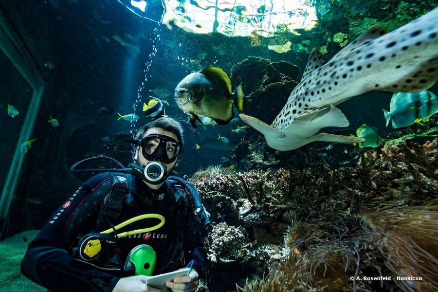 Aquarium Nausicaá