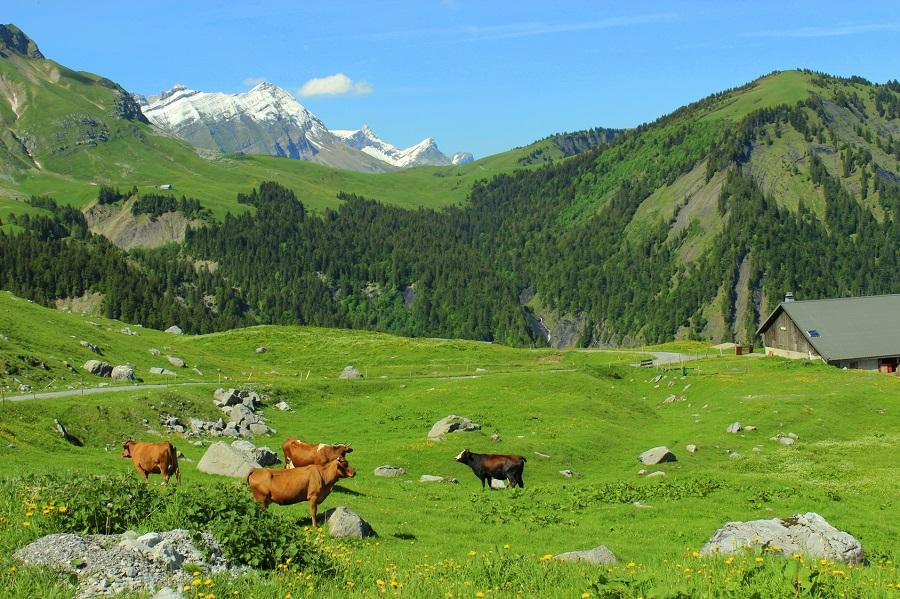 Alpages des Aravis