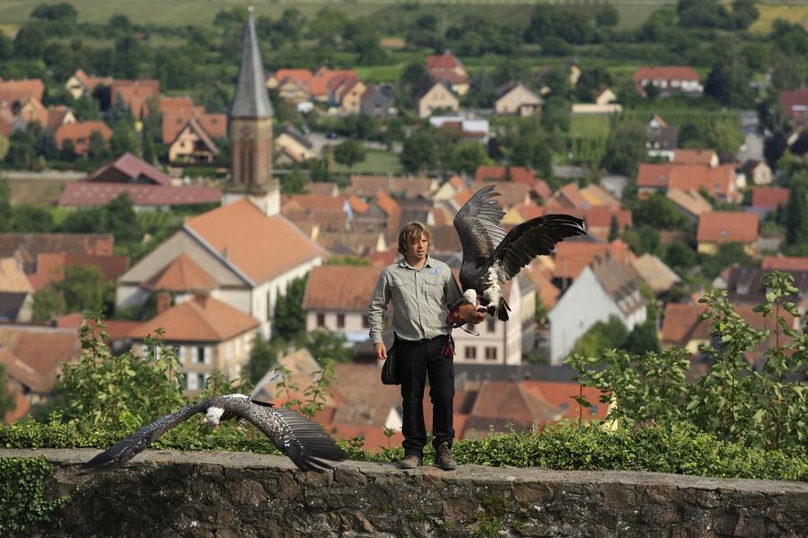 Volerie des Aigles à Kintzheim