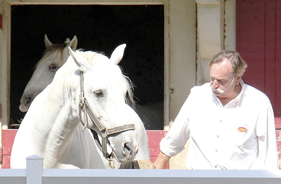 Les Camargue, chevaux de La Petite Camargue