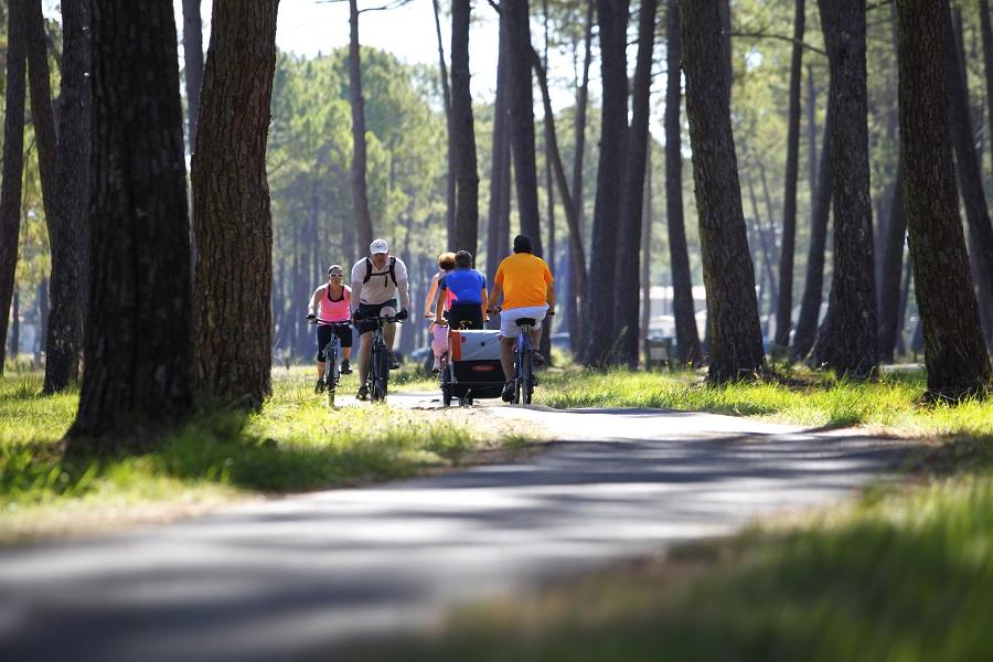 La forêt du Flamand à Montalivet
