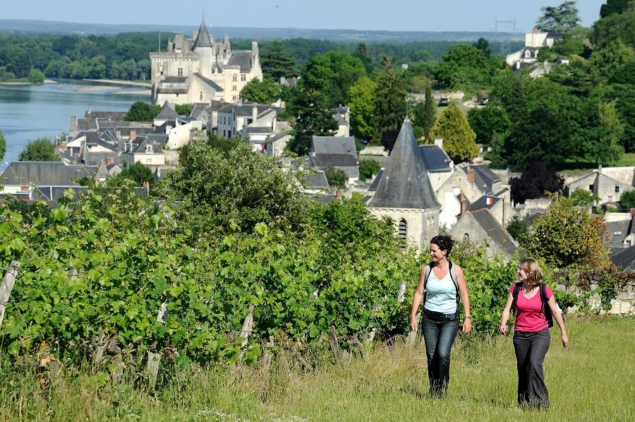 Le vignoble de Saumur