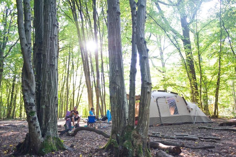 Emplacement de camping dans la forêt de Rambouillet