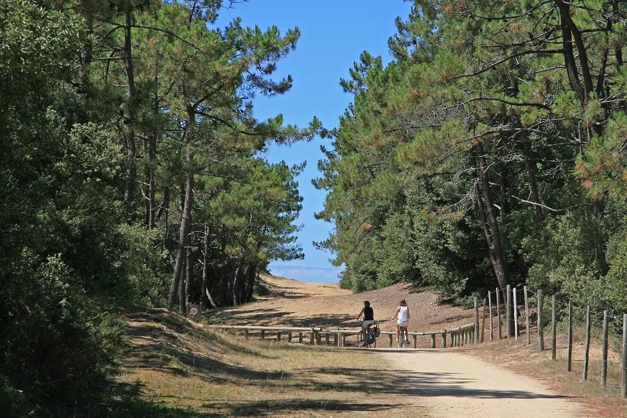 Forêt de pins du Pays de Monts