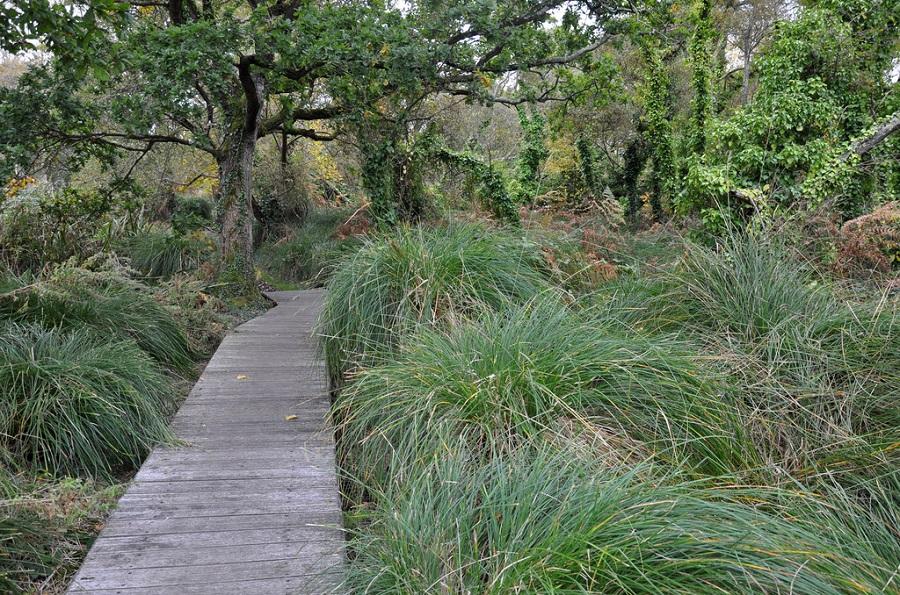 Marais du Quellen