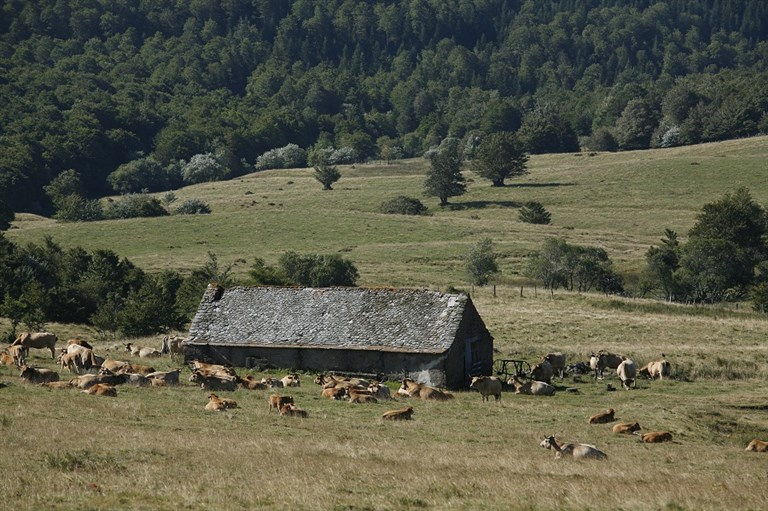 Traditionnel buron d'Aubrac