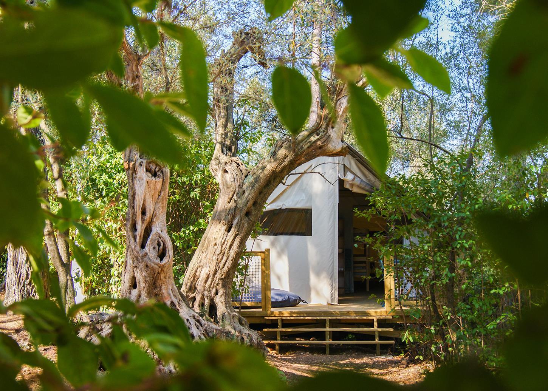 Location - Lodge Cannelle 21M² (2 Chambres) - Camping Le Beau Vezé