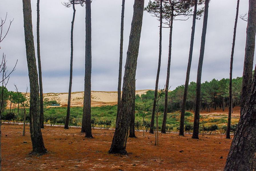 Emplacement - Emplacement Vip 150 (Dune Ou Forêt) - Camping Le Vieux Port