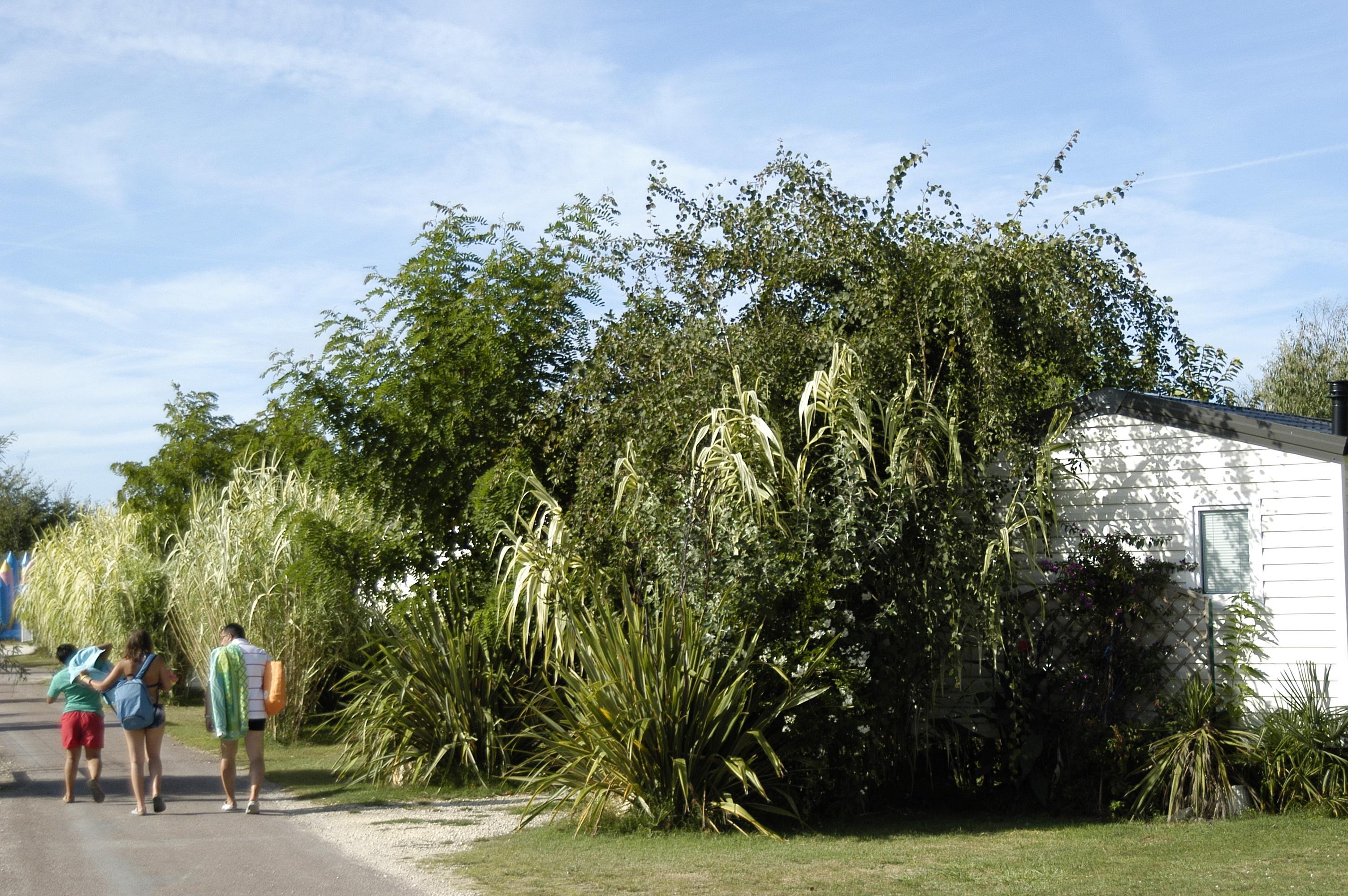Camping Antioche d'Oléron, La Brée-les-Bains, Charente-Maritime