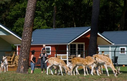 Location - Outdoor Living Lodge 2 Chambres - Camping de Kleine Wolf