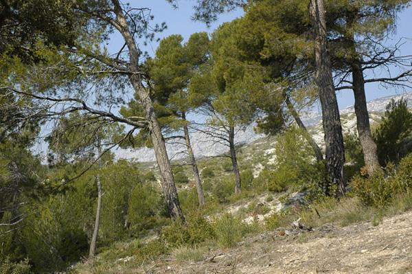 Camping le Cézanne, Puyloubier, Bouches-du-Rhône