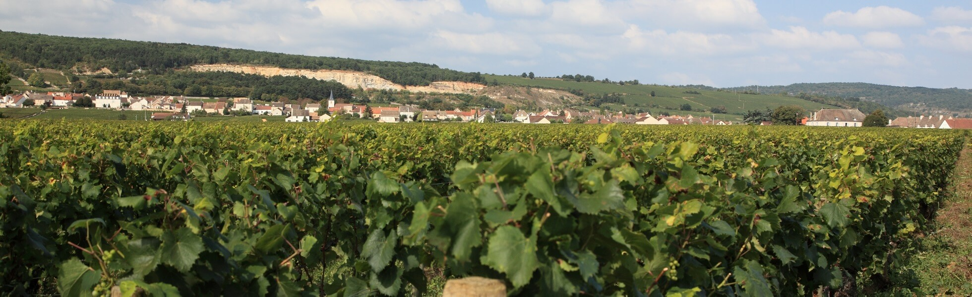 Wine roads
