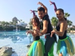 Entertainment organised Marjal Costa Blanca Camping & Resort - Crevillente