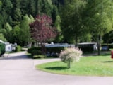 Pitch - Comfort Package (1 tent, caravan or motorhome / 1 car / electricity 6A) - Flower Camping VERTE VALLEE