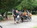 Pitch - Package Horserider : 1 horse + tent + electricity 6A - Camping La Porte d'Autan