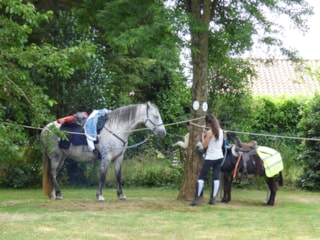Package Horserider : 1 Horse + Tent + Electricity 6A