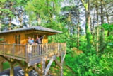 Rental - Tree House - Albirondack Park