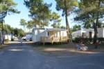 Huuraccommodaties - MOBIL-HOME Confort 2 kamers - terras - Camping Le California