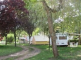 Rental - Tent with single beds - Camping Les Boucles de la Moselle
