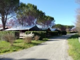 Rental - Canvas Bungalow Freeflower Confort + 37 M² (2 Bedrooms) + Sheltered Terrace 13 M² - Flower Camping Provence Vallée